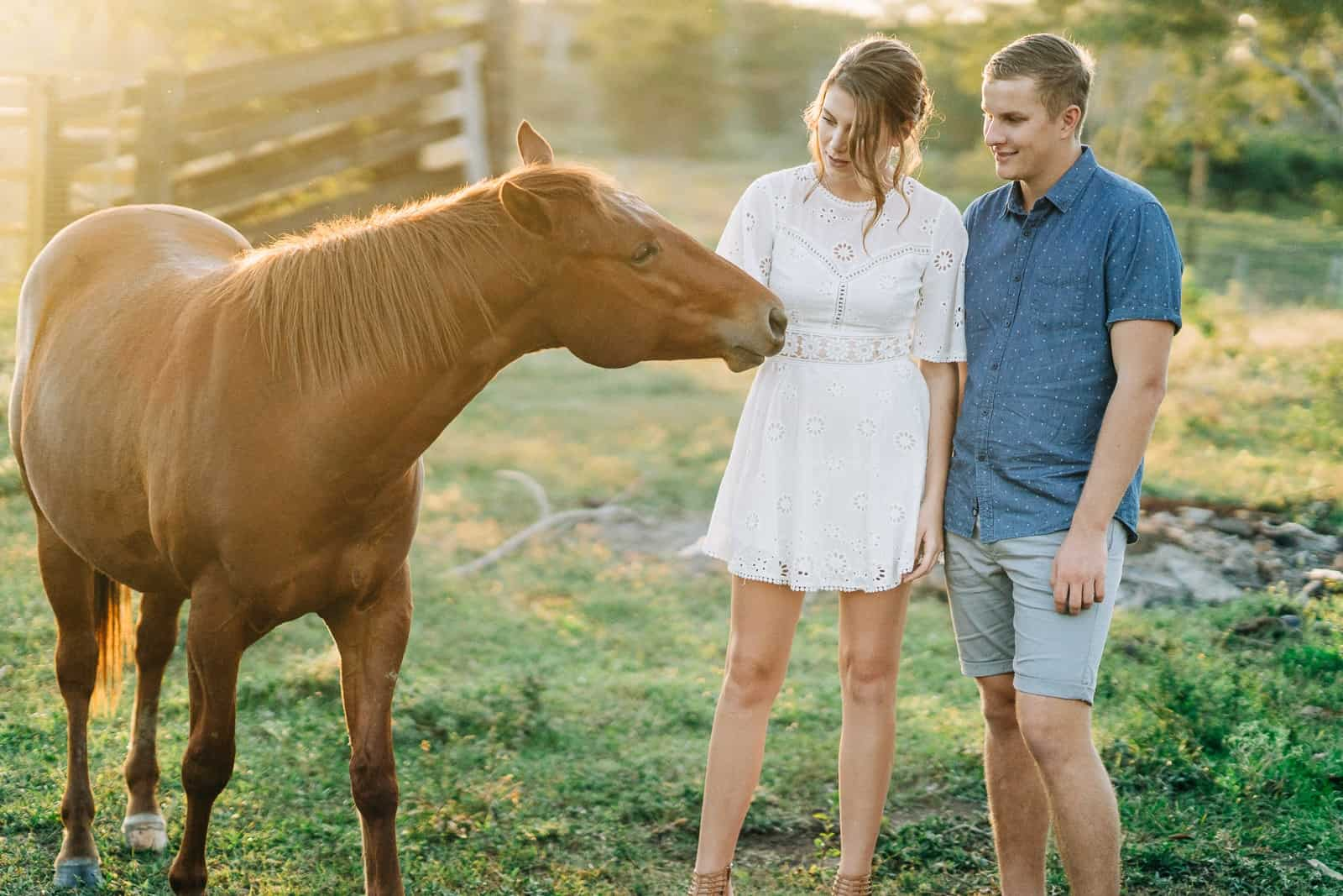Engaged couple with a horse